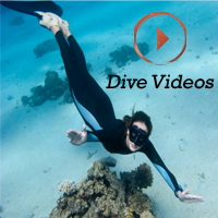 Latest Dive Videos